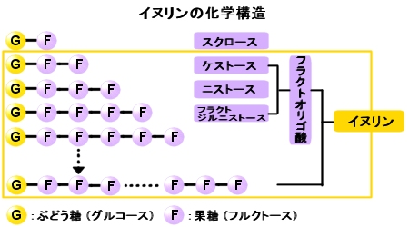 イヌリンの化学構造