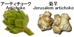 アーティチョークと菊芋